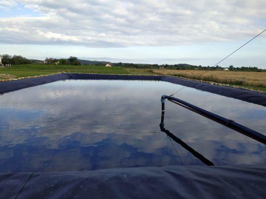 watering-blueberries-1