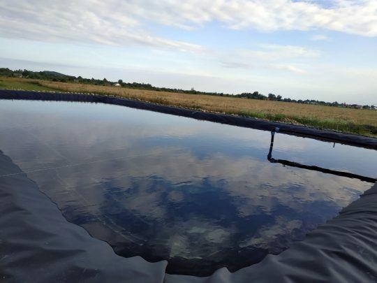 watering-blueberries-6